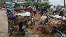 The piglets market 1