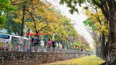 4.6 Walking Ha Noi